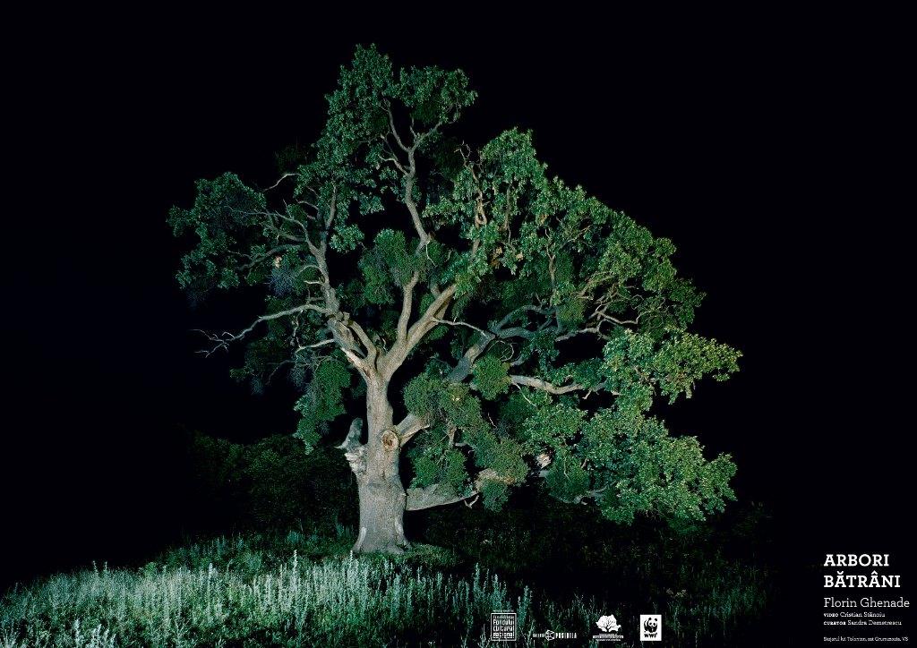 Arbori bătrâni @ Fabrica de Pensule