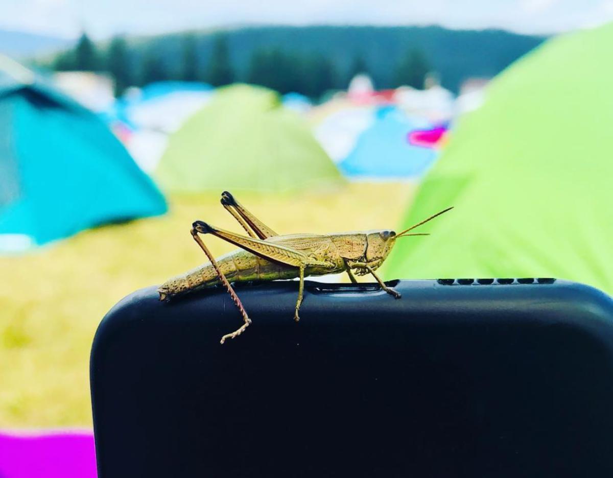 Smida Jazz Festival în 10 dintre cele mai tari poze postate pe Instagram