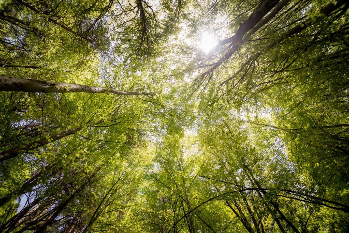 Cum poți susține acțiunile de împădurire din Cluj și din apropiere