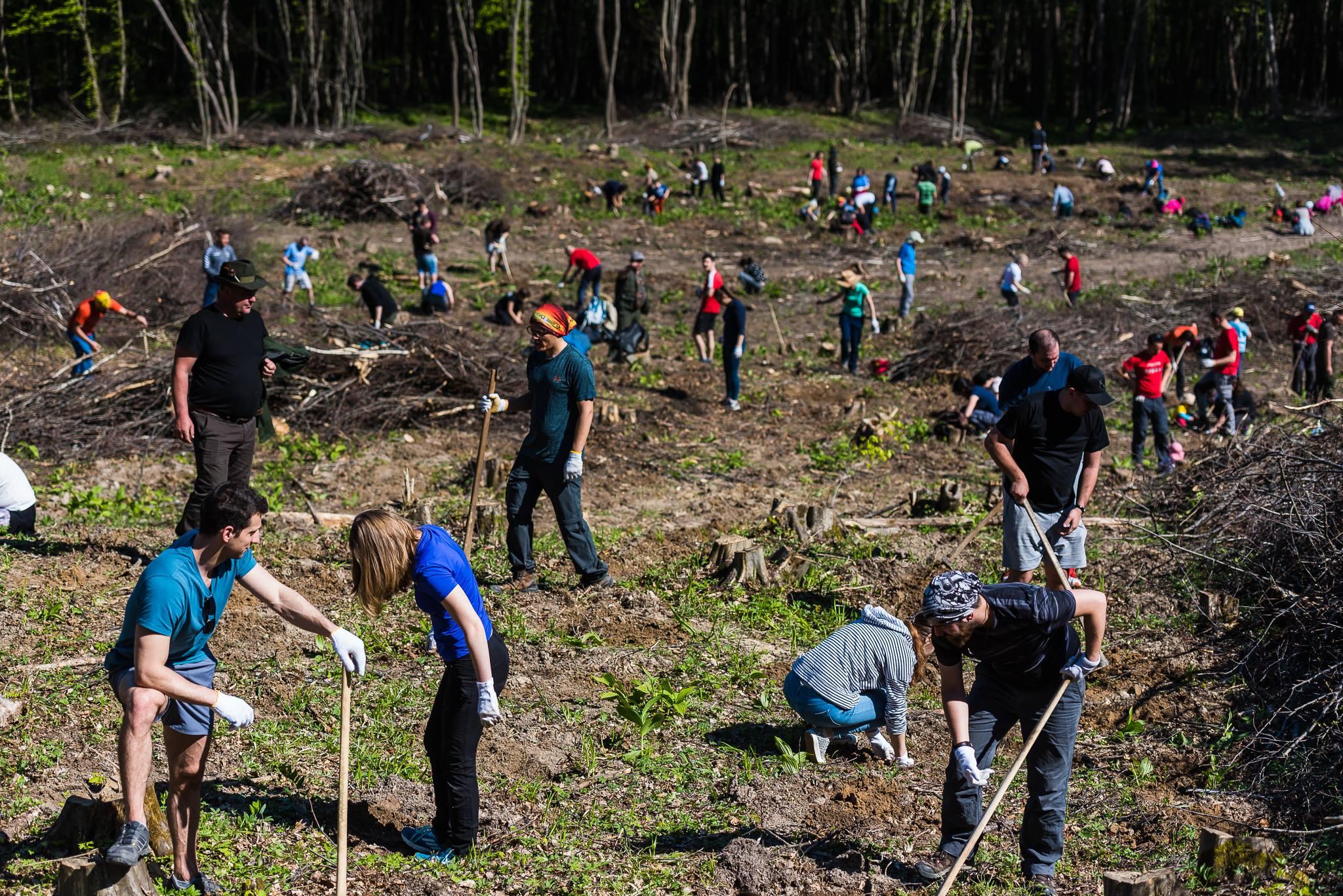 Ne întoarcem la Vâlcele împreună cu .msg România, pentru campania de împădurit 2.0