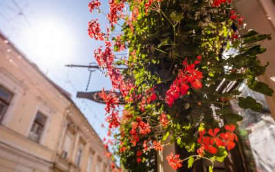 Alătură-te campaniei Centrul Verde și contribuie la înfrumusețarea orașului