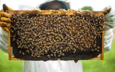 Producători locali de miere și produse apicole #Cluj