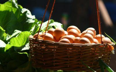Producători locali de ouă din Cluj