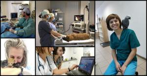 centrul-veterinar-de-specialitate