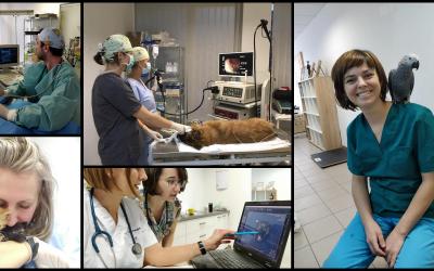 Faceți cunoștință cu echipa de medici de la Centrul Veterinar de Specialitate