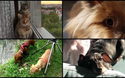 Interviu cu animalele ce trec pragul Centrului Veterinar de Specialitate