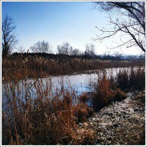 lacurile becas