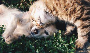 6 organizații și centre de adopții animale din Cluj