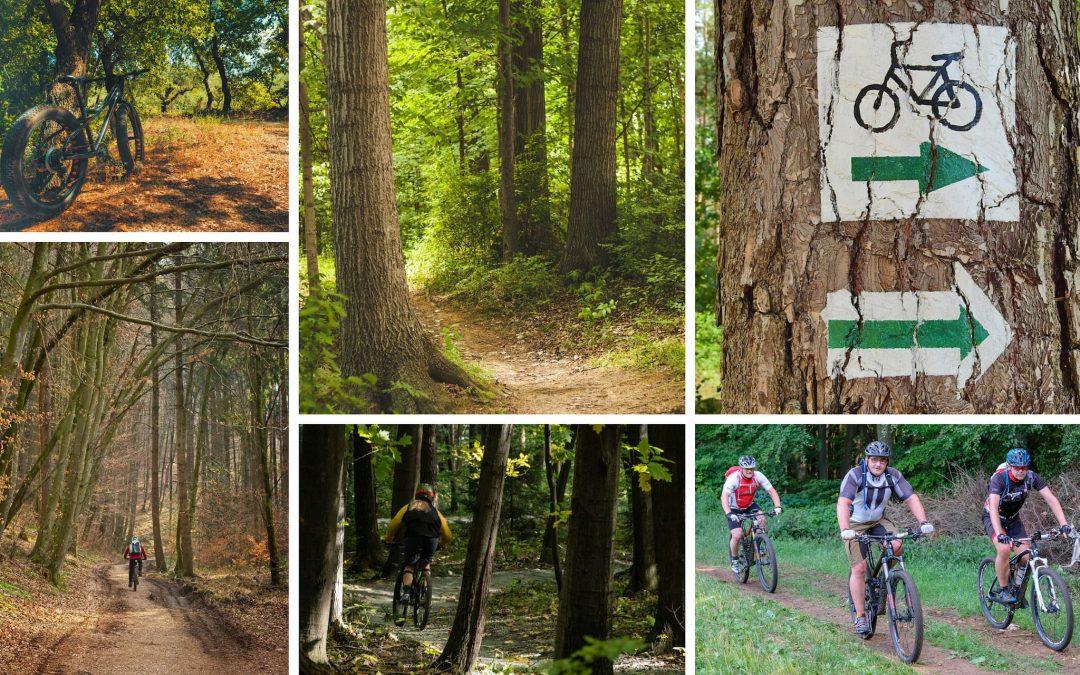 3 trasee de bicicletă în Pădurea Făget